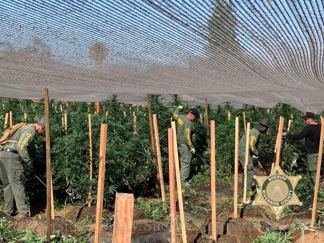 河濱縣警局18日再次大規模出動,掃蕩48處非法大麻窩點。(河濱縣警局推特)