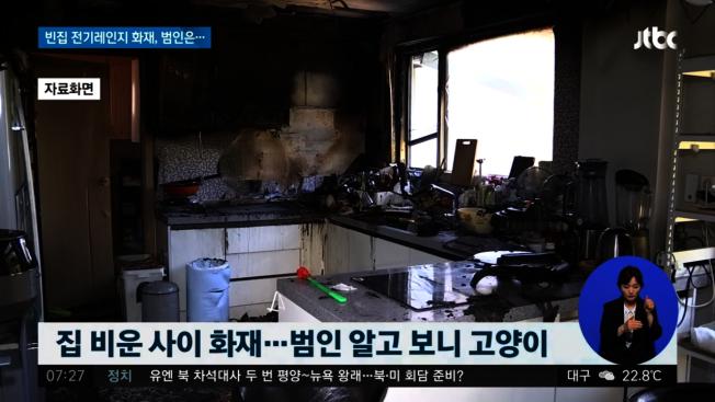 南韓釜山一間公寓在17日上午發生火災,警方調查發現,竟是貓誤觸電磁爐導致廚房意外起火。圖擷自/jtbc