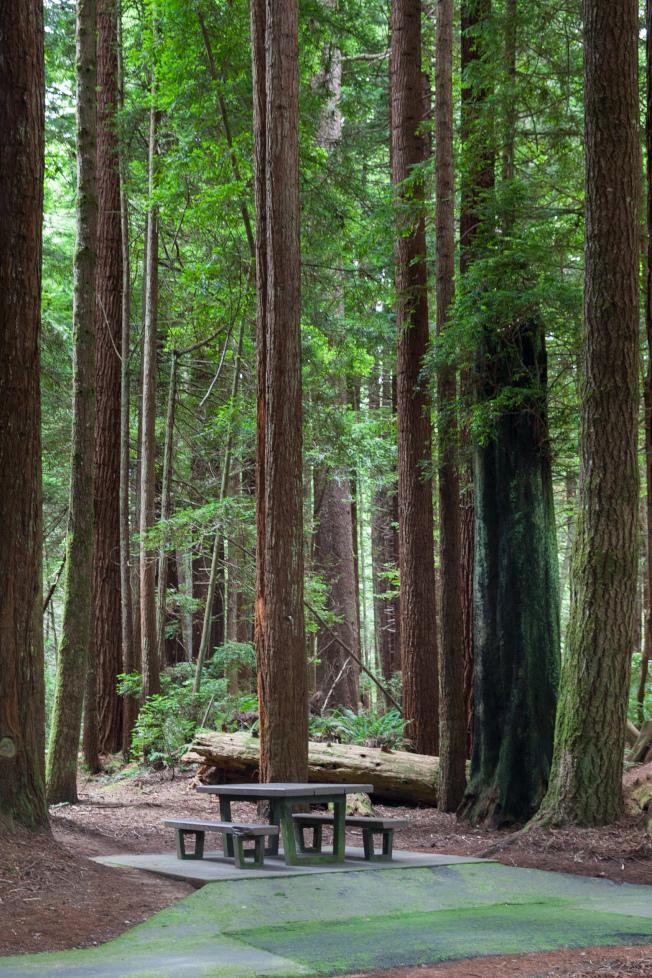 紅木樹林的休息站。
