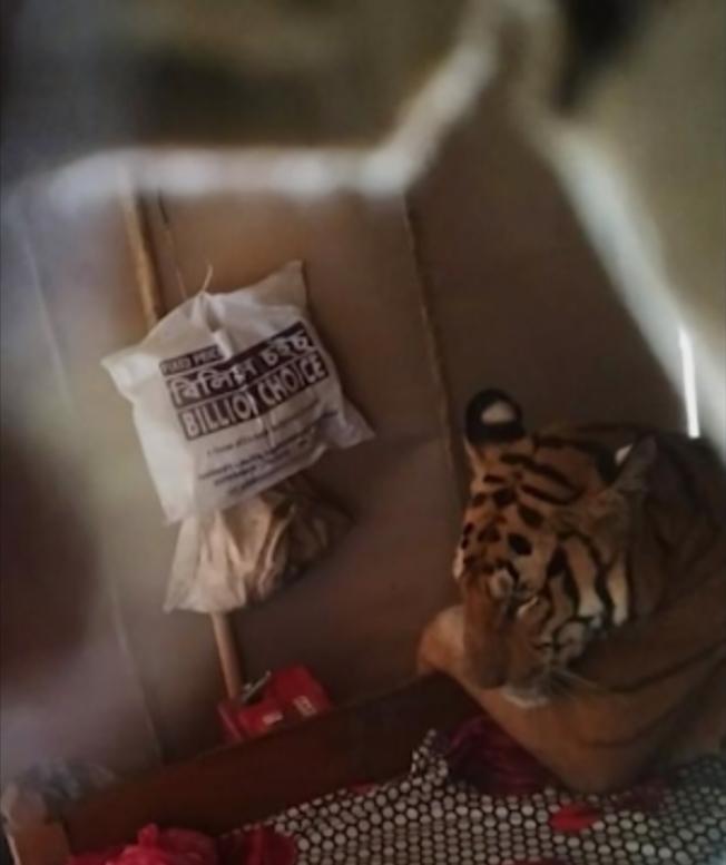 印度東北方的阿薩姆邦最近一周淹大水,導致許多野生動物家園被毀、流離失所。當地一戶人家就驚訝發現,一頭身形龐大的母老虎不但闖進他們家,還在床上呼呼大睡。美聯社