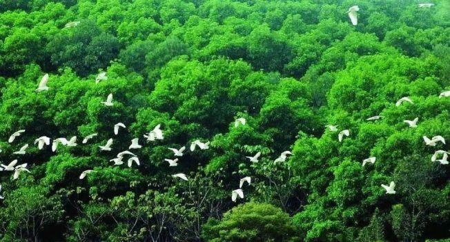被稱為「小鳥天堂」的景區,多年來形成各種鳥類群聚的自然生態景觀。(取材自中國鐵路))