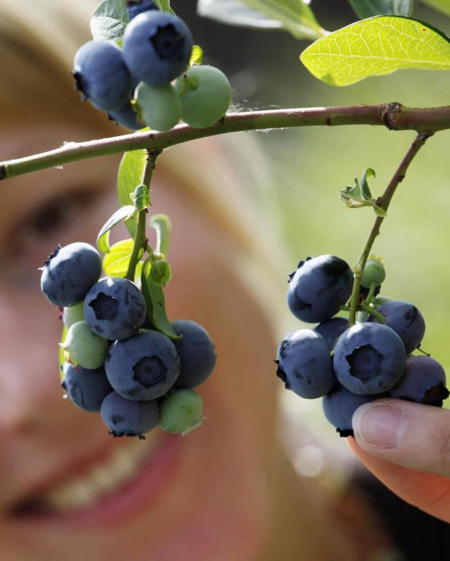 藍莓含有抗氧化物質「多酚」,有助於中和身體發炎反應。(Getty Images)