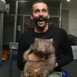 澳洲袋熊有救了 專家找到治療獸疥癬藥物