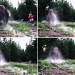 美洲野牛撞飛女童! 黃石公園證實影片為真