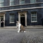 新英相強生想學邱吉爾養狗 第一貓推文喊「NO!」