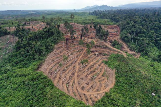 樹木是其中一種被人類快速消耗的地球資源。圖為印尼棕櫚業者大幅砍伐原始熱帶雨林。(歐新社)