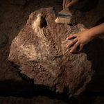 亞洲首例 江西發現暴龍化石足跡 長58公分尺寸驚人