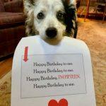 認得1022個字彙、會推理 世界最聰明狗狗逝世享年15歲