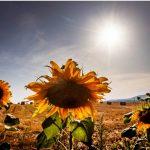 「今天熱浪將是明天普通事件」 美西南部恐現大乾旱