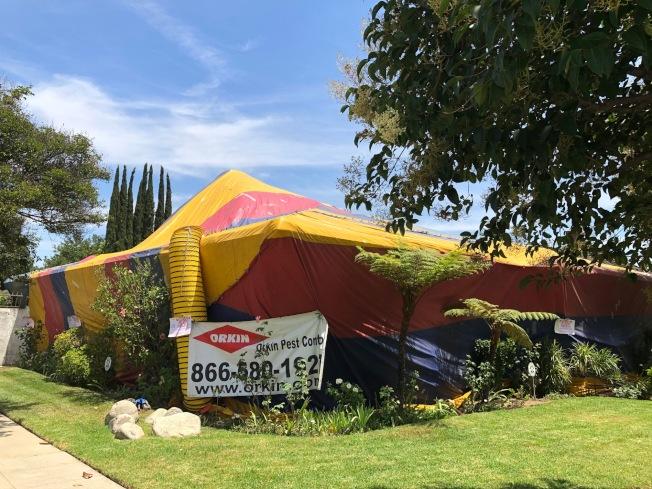 聖瑪利諾市一棟老宅在發現白蟻後進行全屋殺白蟻工程。(記者胡清揚/攝影)