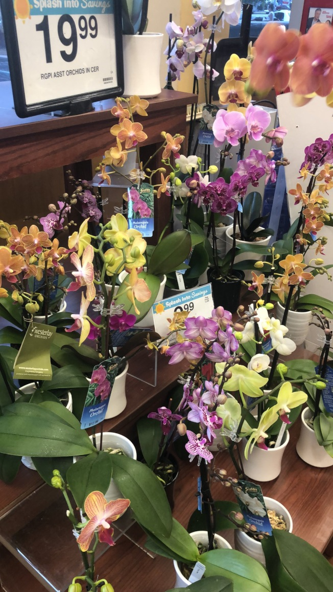 新鮮蘭花適合室內,華洋超市中賣得火熱。(記者王若然/攝影)