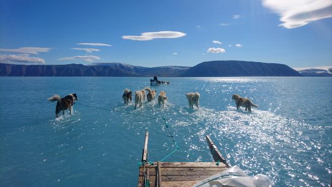 常年冰天雪地的格陵蘭受熱浪籠罩,海冰開始溶解,圖為丹麥氣象局發布的照片,顯示一隊雪橇犬奔馳在溶解的海冰上,出現「水上行雪橇」奇觀。(歐新社)