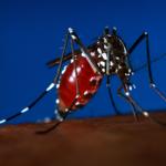 麻州東南部7城鎮 列東馬腦炎高風險區