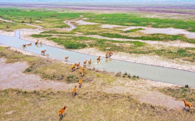 位於黃海之濱的江蘇大豐麋鹿國家級自然保護區,這是黃(渤)海候鳥棲息地的一部分。(Getty Images)