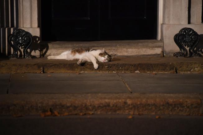賴瑞經常懶洋洋地躺在官邸門口前的台階上。(Getty Images)