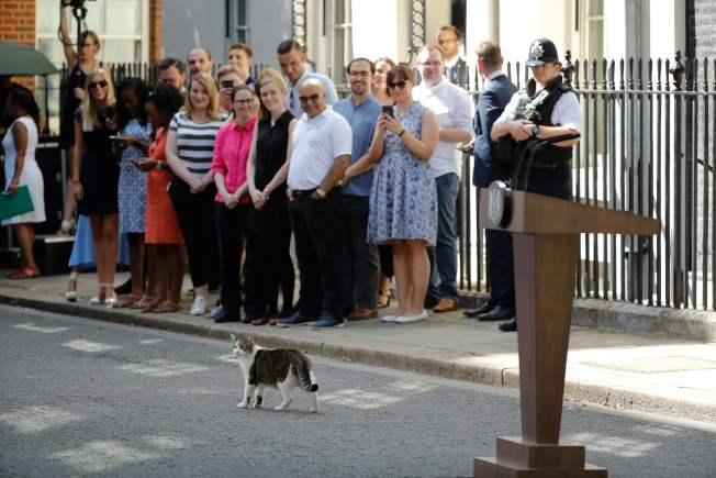7月24日新任英國首相強生上任,聚在官邸前的民眾看著賴瑞貓。(Getty Images)