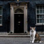 封面故事|鎮守首相官邸 賴瑞貓的「英式傲骨」