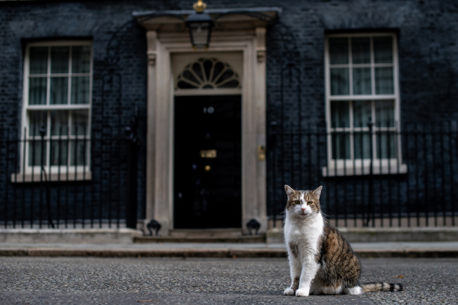 見證三任首相的「英國第一貓」賴瑞。(Getty Images)