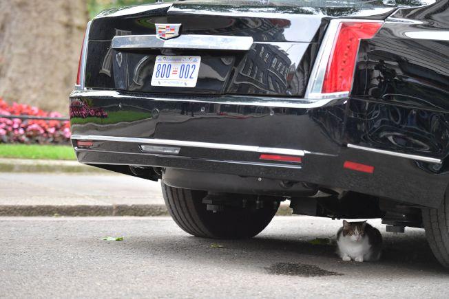 川普的座車因為賴瑞蹲在車底不走,而無法動彈。(Getty Images)