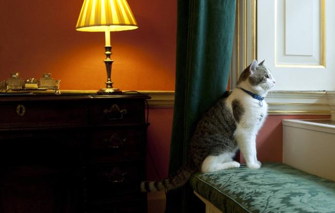 賴瑞在官邸中的模樣。(Getty Images)