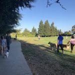 庫比蒂諾Jollyman公園 10月起試行遛狗免牽繩