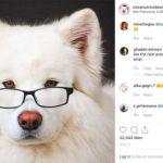 華裔愛犬成網紅年賺8萬