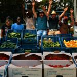 大波士頓地區10佳採摘農場 選擇多樣