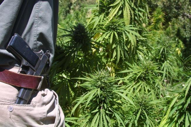 呼大麻致精神病增4成 與濫射案難脫關係