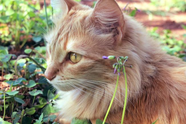 貓與一些植物是可能共處一室的,但要找到保護兩者的方法。(Pexels)