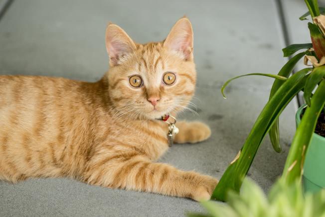 接受貓會啃咬一些室內植物的事實,畢竟這也是貓咪的家。(Pexels)
