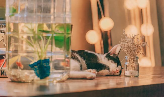 可以將較細緻的植物放在玻璃容器裡,就不怕貓破壞。(Pexels)