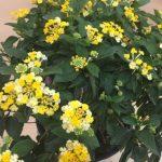 種對植物 一年四季鮮花常開