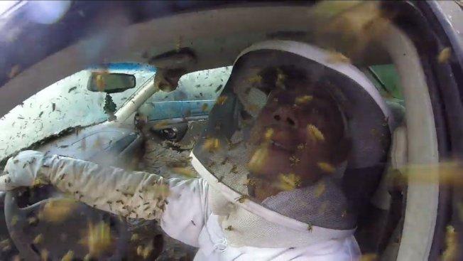 除蟲專家維瑞特穿起專業保護裝備展開除蟲,並玩心大發,找來同行友人,座上這輛黃蜂巢車,大玩搭便車的梗。圖片擷取YouTube/Stinger Creations影片
