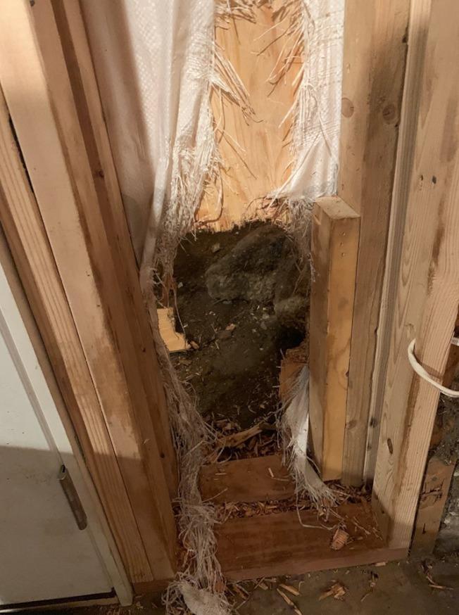 美國一隻黑熊闖民宅破牆落荒而逃。圖取自臉書(@estesparkpolicedepartment)