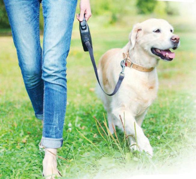 帶愛犬散步的好處更甚於上健身房。(Getty Images)