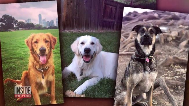 美國德州奧斯汀的「瓢蟲湖」近期一連有3隻狗狗先後在湖中玩耍後,都在不到一個小時內死亡。北卡州與德州也都傳出相同案例,有學者就懷疑毛小孩們因為口渴,喝下富含有毒藍綠藻的水後死亡。取材自YouTube