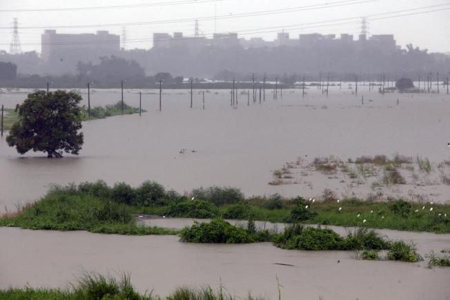 暴雨狂炸南台灣,高雄阿蓮二仁溪溪水暴漲,附近農田全泡在水中,作物幾遭淹沒。(記者劉學聖/攝影)
