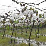 極端氣候 台灣農業地圖大亂 農民自尋生路