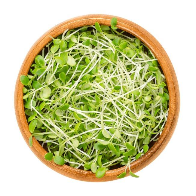 生芽菜是許多食源性疾病的宿主。(取自推特)