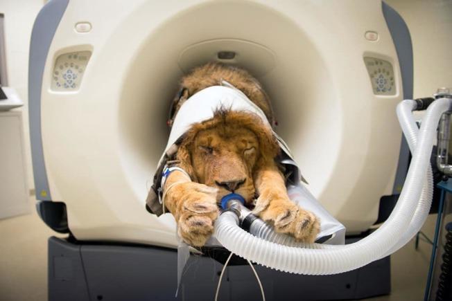 臉書粉絲專頁「Medicine Meets Technology」分享一系列動物進行電腦斷層掃描的照片。(取材自臉書)