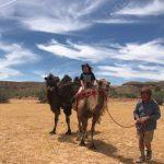 住蒙古包、騎駱駝 賭城新玩法