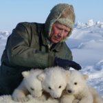 雙語|海冰棲地改變 偶遇北極熊大增