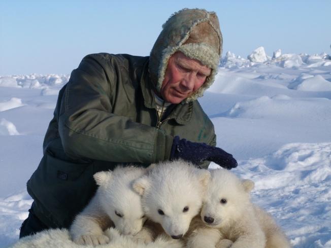 地質調查局研究員在阿拉斯加普拉德霍灣(Prudhoe Bay)細心照料北極熊寶寶。(美聯社)
