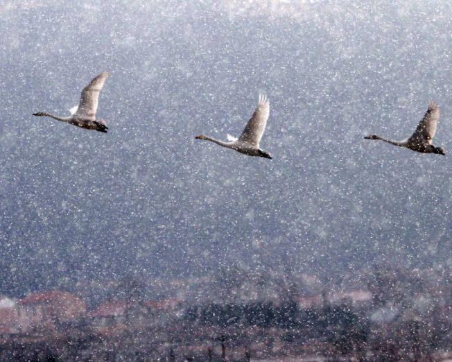 這10隻「灰天鵝」若飛來 恐危害全球經濟與市場