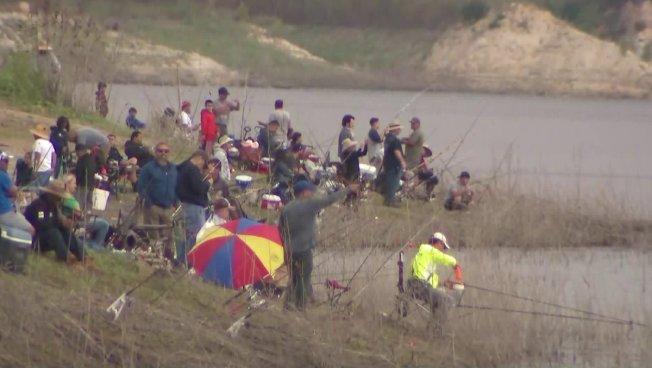 數十名釣客搶頭香,在爾灣湖岸邊甩桿。(KTLA電視台)