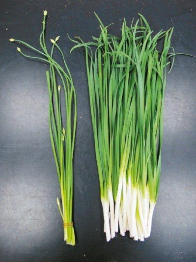 韭菜、洋蔥、大蒜等辛香味的蔬菜,建議要切碎、拍打後食用,才能讓食物中的抗氧化物與氧氣接觸,產生作用。(本報資料照片)