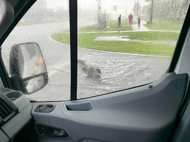 日前美國一名男子,駕駛車輛在等紅燈時,突然有一隻身長2.4公尺的短吻鱷,在積水的馬路上,往駕駛座的方向快速前進,讓男子嚇了一大跳。取材自臉書
