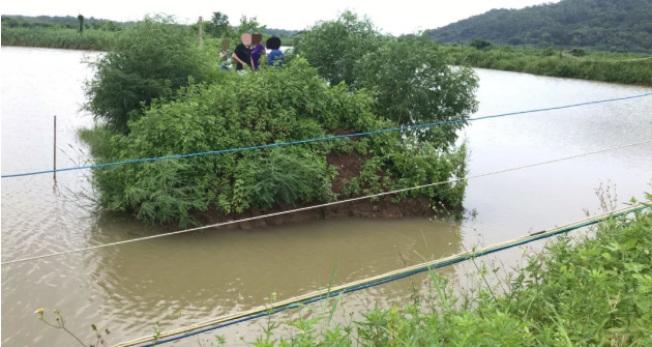 三男一女被困魚塘中間的一座小「孤島」。(取材自澎湃新聞)
