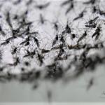 麻州「東馬腦炎」嚴重風險  再添10城鎮