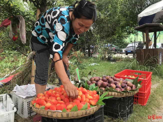 謝洪英在成都大熊貓基地賣水果。(取材自紅星新聞)